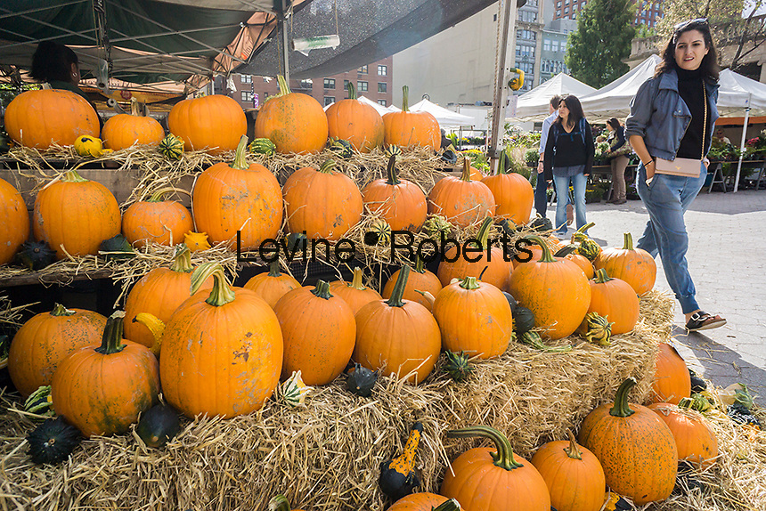 Pumpkins for sale in the Union Square Greenmarket in New York on Wednesday, October 12, 2016. Supplies of pumpkins are expected to be able to meet this year's demands as opposed to last year when the fear of a pumpkin shortage gripped the nation.  (© Richard B. Levine)
