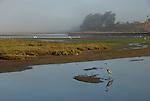 great blue heron at Moss Landing