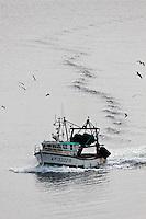 Europe/France/Bretagne/56/Morbihan/ Belle-Ile-en-Mer/Le Palais: Un chalutier rentre au port