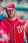 6 April 2014: Washington Nationals outfielder Bryce Harper walks down the dugout during a game against the Atlanta Braves at Nationals Park in Washington, DC. The Nationals defeated the Braves 2-1 to salvage the last game of their 3-game series. Mandatory Credit: Ed Wolfstein Photo *** RAW (NEF) Image File Available ***