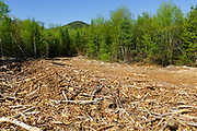 Skidder road from the Kanc 7 Timber Harvest project in the area of Forest Road 567 along the Kancamagus Scenic Byway (route 112) in the White Mountains, New Hampshire USA