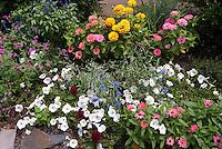 Annuals marigolds, zinnias, bachelor buttons Centaurea, petunias, Salvia farinacea, Celosia, blue flowers, pink, yellow, lavender, white colors, mixed in summer garden