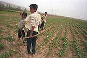 In the countryside of the Ferghana valley three men till their land. Ferghana valley is famous for being the most fertile area in the region, and was an important re-fueling and resting place on  the Old Silk Road trading route. Uzbekistan