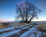 Idaho, Palouse, Moscow. A seasonal road on the Idaho Palouse in winter.