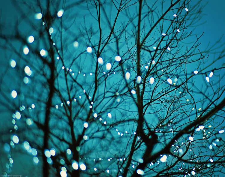 sparkly lights in a tree at night