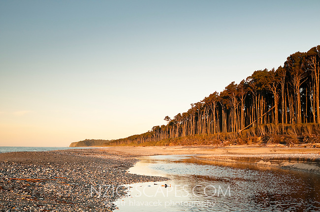 Sunset at Bruce Bay with rimu trees, South Westland, West Coast, New Zealand