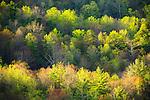 Budding spring forest, Black Rock Mountain State Park, Georgia