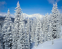 San Isabel National Forest, CO:  Fresh snow on pines and mountain ridges near Monarch Pass