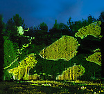 Abstract light projection on green trees and grass, beautiful abstract night nature scenery