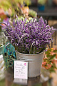 Fresh lavender bouquets for sale at Ali'i Kula Lavender Farm, upcountry Maui, Hawaii.