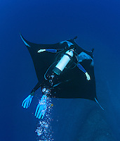 QT2454-Dv. Manta Ray (Manta birostris) and scuba diver (model released). Baja, Mexico, Pacific Ocean. Cropped to vertical from native horizontal format.<br /> Photo Copyright &copy; Brandon Cole. All rights reserved worldwide.  www.brandoncole.com
