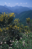 Flora in Maritime Alps France