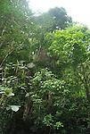 Parque Nacional Henri Pittier, Edo. Aragua, Venezuela