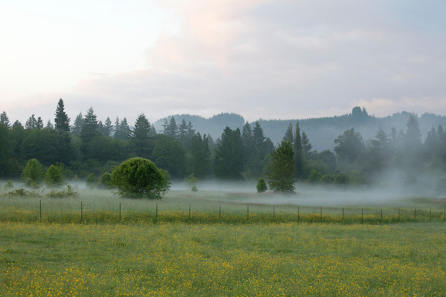 A flower-filled meadow with fog, near North Cascades National Park, northern Washington state, USA