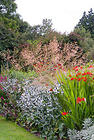 Crocosmia Lucifer red flower bulbs planted with Stipa calamagrostis ornamental grass showing red flowers and feathery plumes & Eryngium