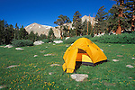 Yellow dome tent in a meadow, John Muir Wilderness, Inyo National Forest, Sierra Nevada Mountains, California