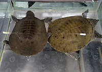 Turtle food, Tesco, China