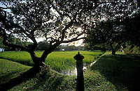 The rice paddies by the lake at sunrise.<br />