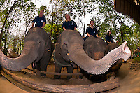 Mahout training course, Thai Elephant Conservation Center (National Elephant Institute), Lampang, near Chiang Mai, Northern Thailand