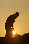 Charles Fry works at sunrise atop a truck full of beans. He uses a small rake to even them out in the truck before they are taken to the processor...Edamame harvest at the Fry Farm in Tiffin, Ohio.Charles C Fry.American Sweet Bean Company