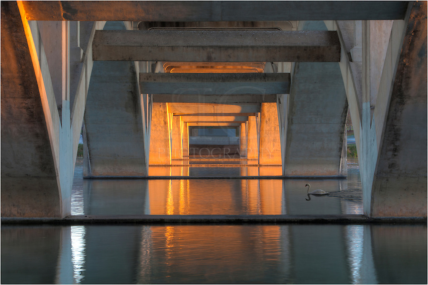 As beautiful light was filtering down Lady Bird Lake in Austin, Texas, a graceful swan graced my presence as I was photographing the architecture beneath Lamar Bridge.