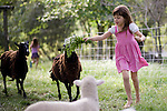 Bea Ferrell plays with the sheep at their home in Lincoln, CA May 13, 2009.