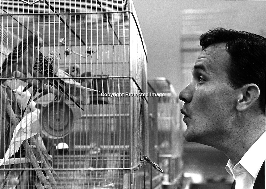 Singer Roger Miller with canaries in San Francisco bird shop..(1965 photo by Ron Riesterer)