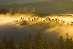 A blanket of fog hovers over the North Fork of the American River, Auburn, California.