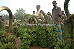 Man sellng bananas in outdoor market, post-Tsunami, Sri Lanka