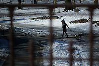 A woman walks her dos inside central park during low temperatures in New York. 16.02.2015. Eduardo Munoz Alvarez/VIEWpress.