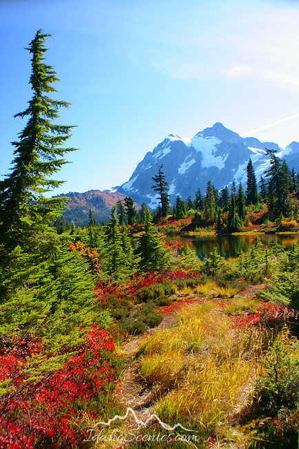 Fall Colors at Mt Shuksan