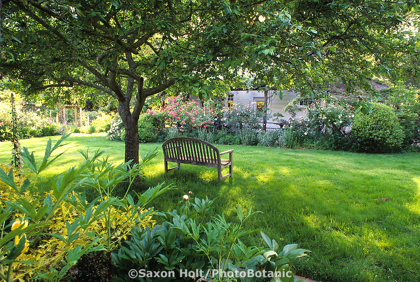 Bench on lawn under tree in informal country garden