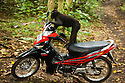 Young male crested black macaque on motor bike, (Macaca nigra), Indonesia, Sulawesi, endangered species, threatened through loss of habitat and bush meat trade, species only occurs on Sulawesi.