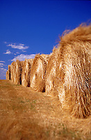Row of hay bales.