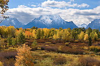 Fall Colors near Mount Moran, Grand Teton National Park