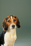 Beagle Shopping cart has 3 Tabs:<br /> <br /> 1) Rights-Managed downloads for Commercial Use<br /> <br /> 2) Print sizes from wallet to 20x30<br /> <br /> 3) Merchandise items like T-shirts and refrigerator magnets