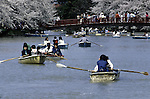 Boaters get a close up view of cherry blossom trees lining the banks of a river at the Cherry Blossom Festival held in Oyo Park near Hirosaki Castle in Aomori Prefecture in Northern Honshu, Japan. Over 1500 cherry trees come into bloom from late April to Early May. (Jim Bryant Photo)