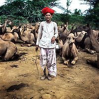 Raika camel breeder, Madharam Raika, surveys his camels before leading them into the Kumbhalgarh Wildlife Sanctuary to graze. The Raika are an ancestral caste of camel breeders in Rajasthan. Due to the increased cost of feeding and shelter, more and more Raika are being forced to sell off their camels, often for camel meat, which was once considered taboo.