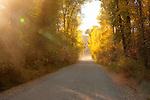 Idaho, Eastern, Swan Valley, A dusty dirt road through autumn color.