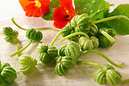 Fresh nasturtium flowers.  leaves &amp; seeds