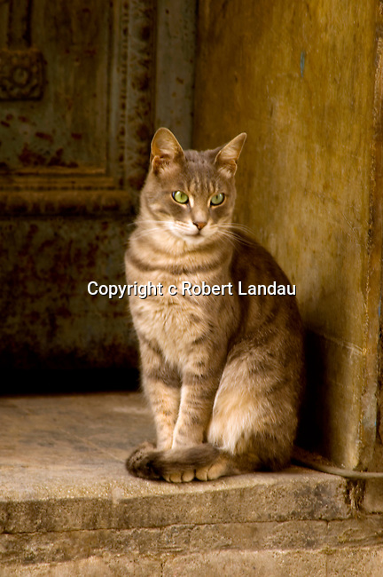 Street cat pauses in doorway in Istanbul, Turkey