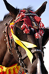 Harnessed brown horse in decorative holiday clothes close-up Winter scenic Ukraine Eastern Europe Shrovetide celebration 2007