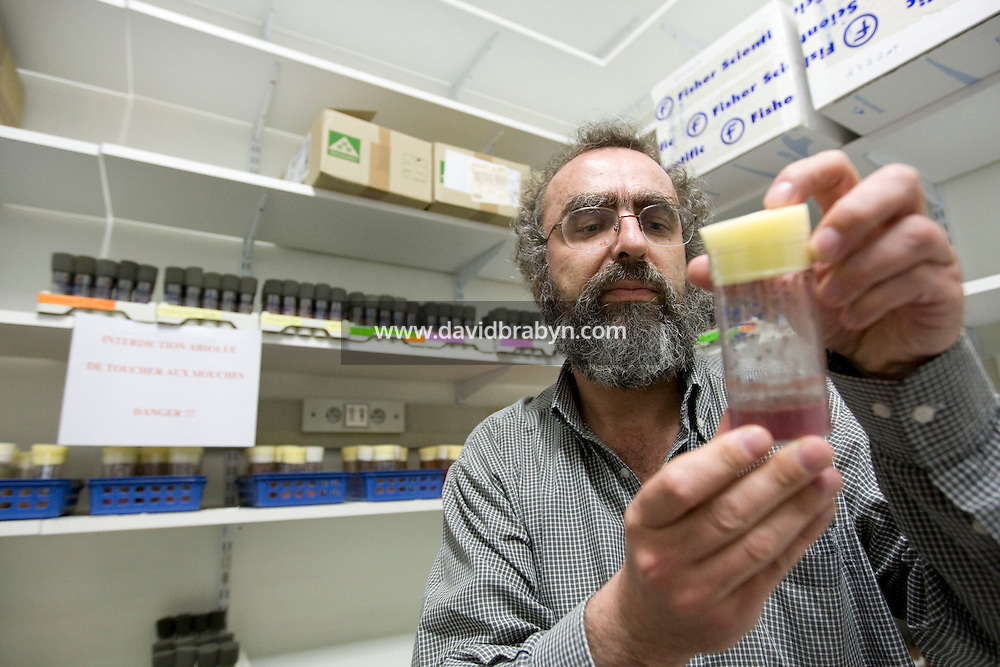 Cancer researcher Dr. Thierry Heidmann holds up a container of small flies used in experiments at the Institut Gustave Roussy in Villejuif, France, 6 May 2008.