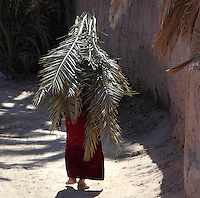 Woman carrying palm fronds on her head in Skoura, Ouarzazate province, Souss-Massa-Draa, Morocco. Skoura is a fertile oasis lined with immense palm groves. Picture by Manuel Cohen