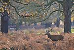 UK, Wildlife