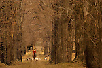 Warrenton fox hunt, VA, est. 1887