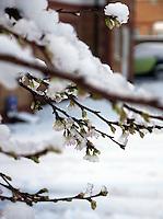 5/12/11 Snow hits Scotland
