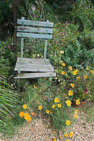 Rustic weathered garden chair with orange poppies in bloom and honesty money plant