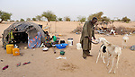 A man feeds goats while a woman prepares food in Timbuktu, a city in northern Mali which was seized by Islamist fighters in 2012 and then liberated by French and Malian soldiers in early 2013.  The couple belongs to the Bella ethnic group, which has traditionally been exploited by Timbuktu's lighter-skinned groups.