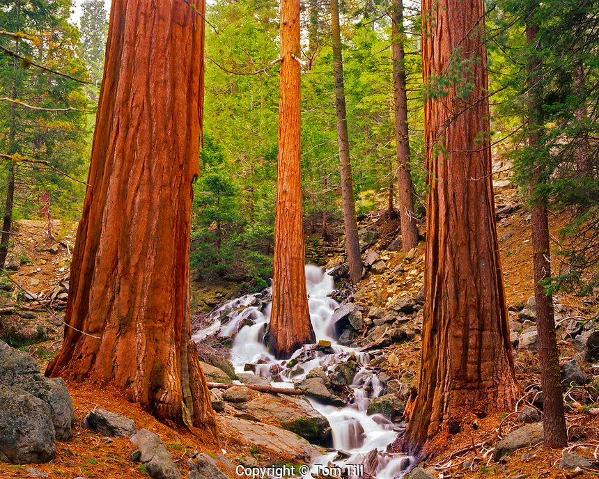 Waterfalls Cascading through Sequoias in Spring Snowmelt, Sequoia National Park, California